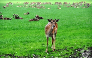 Wildpark Poing Tiere