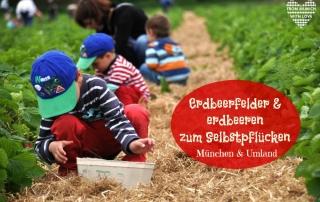 Erdbeeren zum Selbstpflücken München
