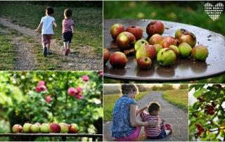 Schwarzwald mit Kindern
