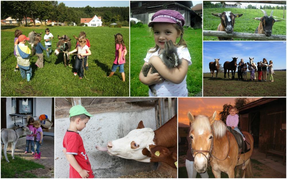 BauernhofTouren_Tiere