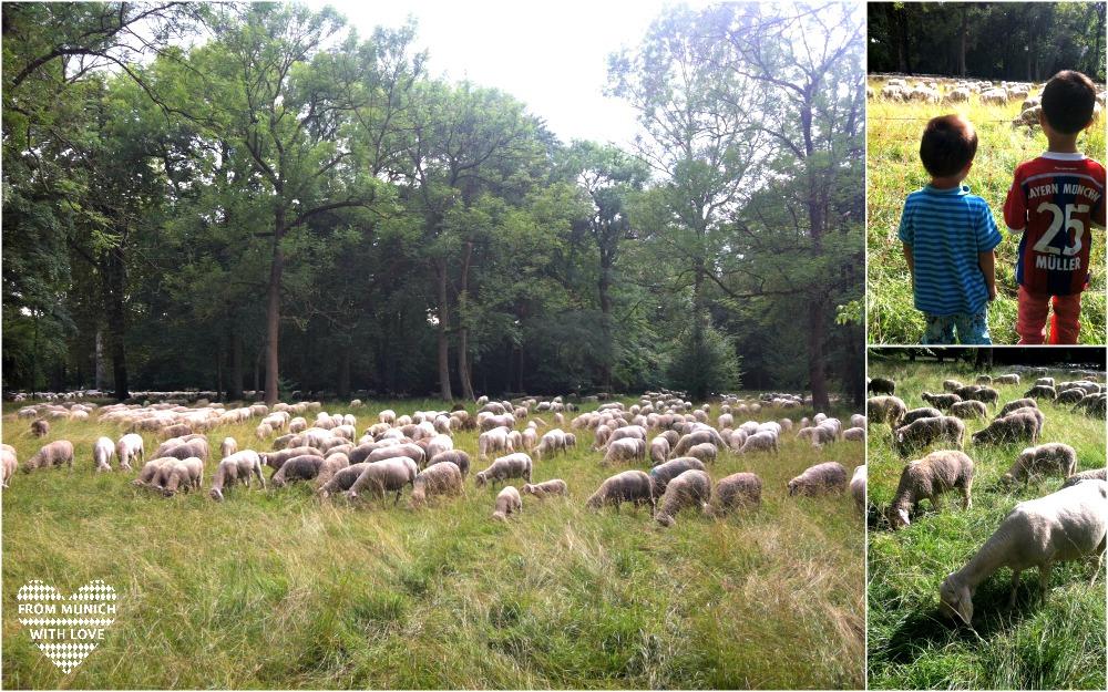Schafe im Englischen Garten